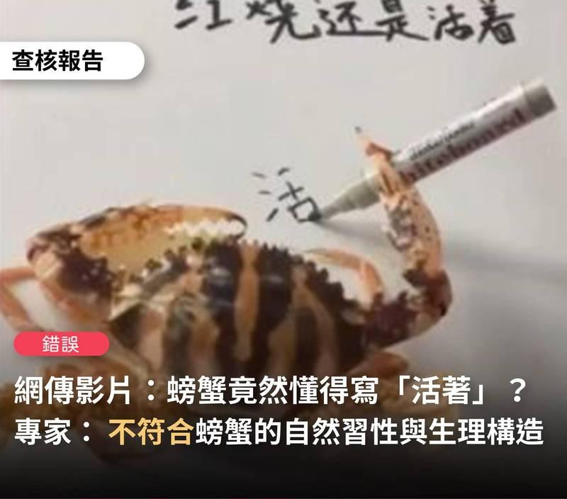 近日社群平台瘋傳一段「螃蟹寫字」的影片,不過經過「台灣事實查核中心」詢問專家後指出,網傳影片呈現的螃蟹行為不是自然行為,因此該訊息為「錯誤」訊息。(翻攝自台灣事實查核中心臉書)