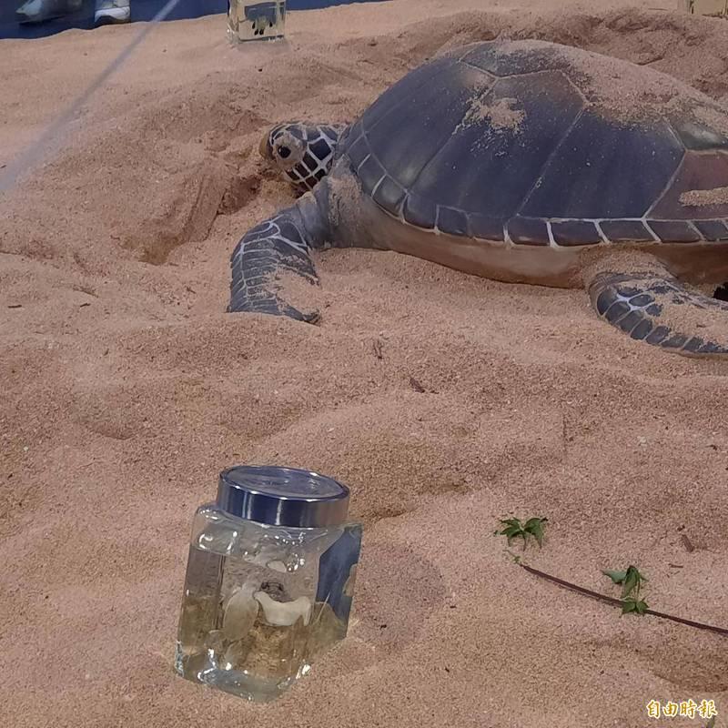 望安綠蠵龜館提供海龜戶外產卵模擬生態,提醒民眾產卵季勿入沙灘。(記者劉禹慶攝)