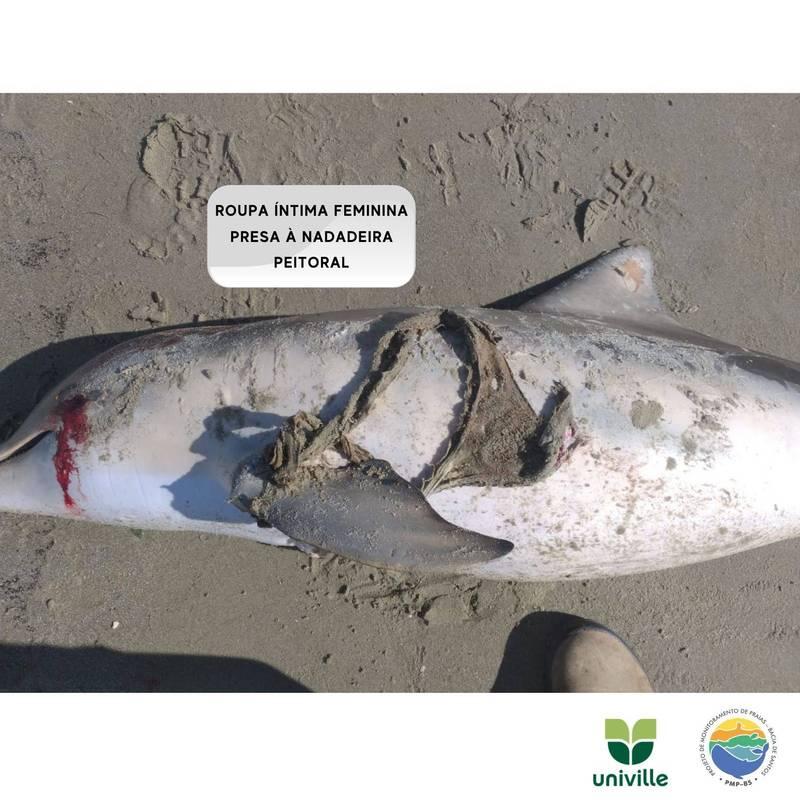 海豚被丁字褲纏繞而失去游泳能力後死亡。(圖擷取自臉書_Projeto de Monitoramento de Praias - PMP/ BS Univille - Trecho 5)