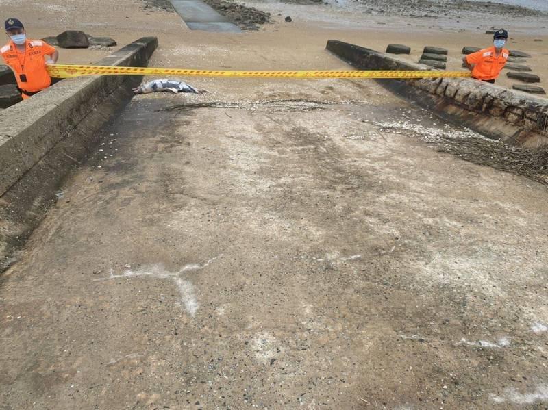 金門岸巡隊在劉澳岸際發現1隻死亡鯨豚,立刻拉起封鎖線管制進出。 (金門岸巡隊提供)
