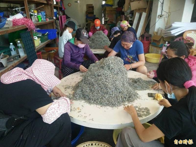 澎湖赤崁丁香魚口感佳,部分加工製作成干貝醬。(記者劉禹慶攝)