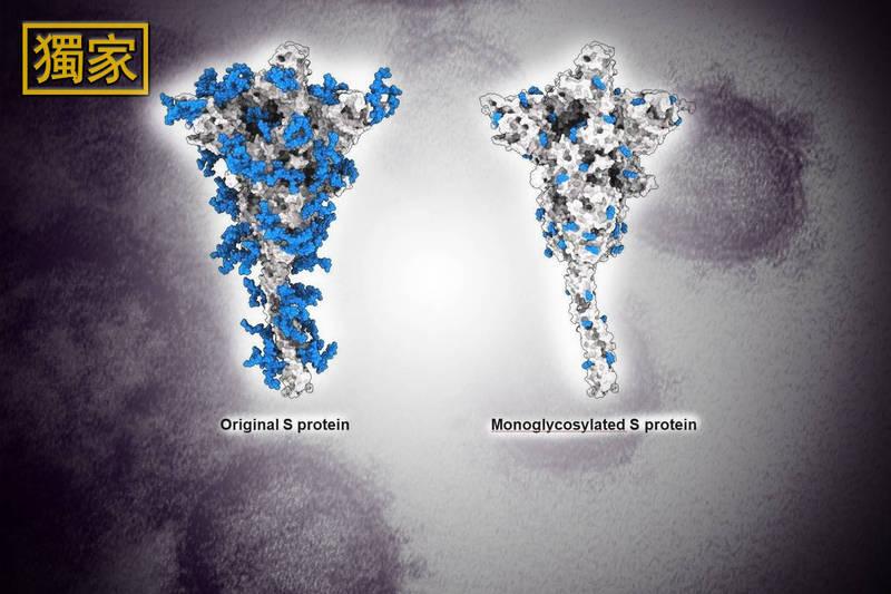 中研院院士翁啟惠與中研院基因體研究中心研究員馬徹團隊設計研發新疫苗,能更有效對抗新冠病毒與其變種株。(本報合成)