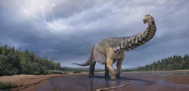 澳洲歷來出土的最大恐龍,被稱為南方泰坦巨龍(Southern Titan)。(圖擷自Eromanga Natural History Museum臉書)