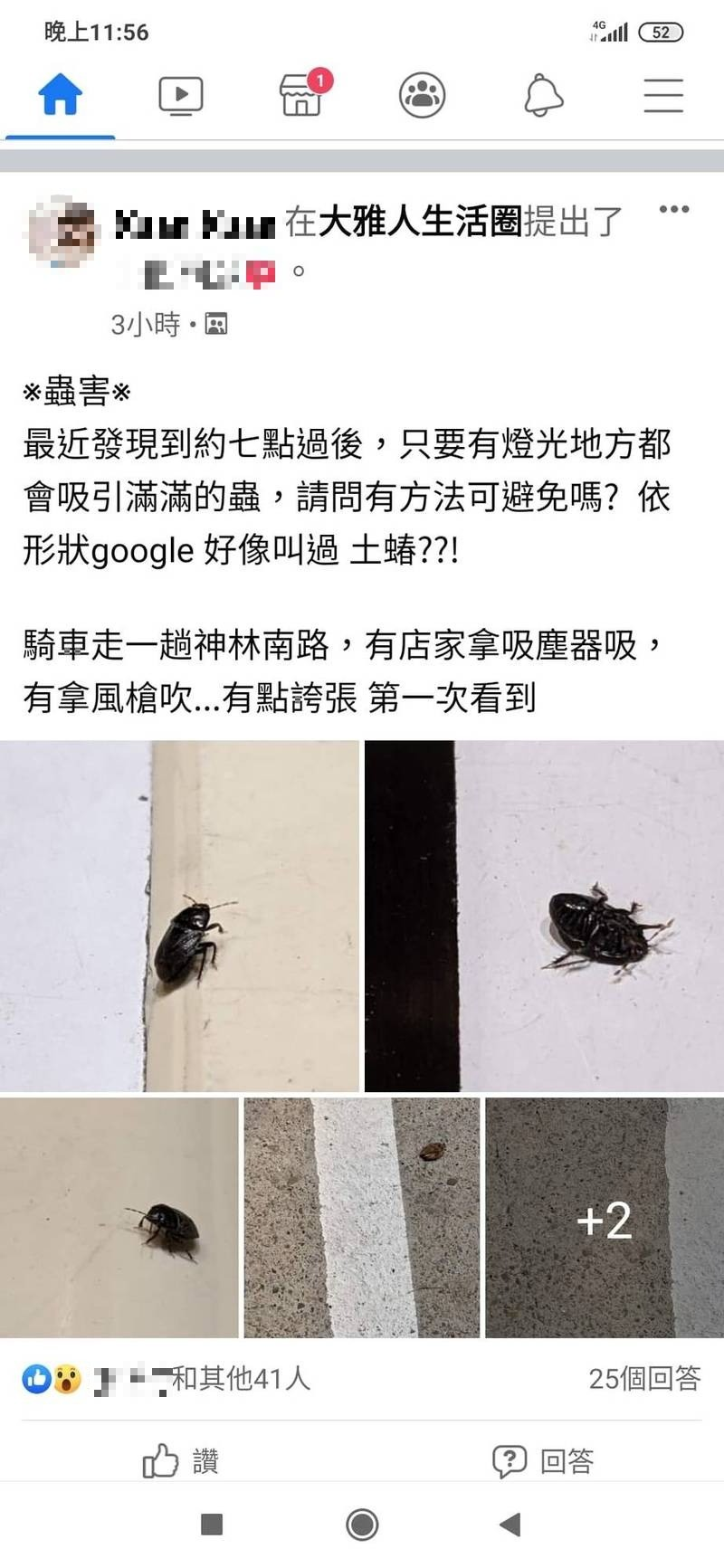 大雅居民反映出現大量臭蟲 中市農業局:非病媒害蟲勿驚慌