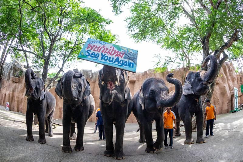 疫情重挫,財務困境使「是拉差老虎動物園」無法繼續飼養園區內動物,被迫出售11頭大象(圖擷取自สวนเสือศรีราชา Sriracha Tiger Zoo 臉書)
