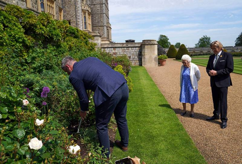 Roses were then planted in the East Balcony Garden of Windsor Castle.  (AFP)