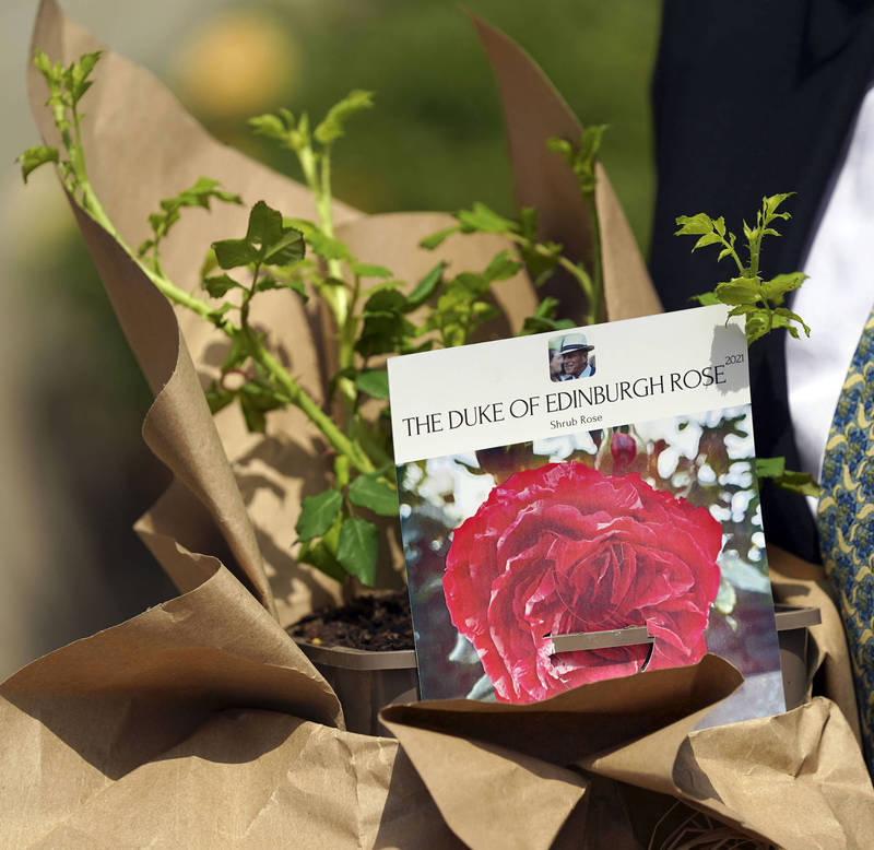 The rose is named after the Duke of Edinburgh.  (Associated Press)
