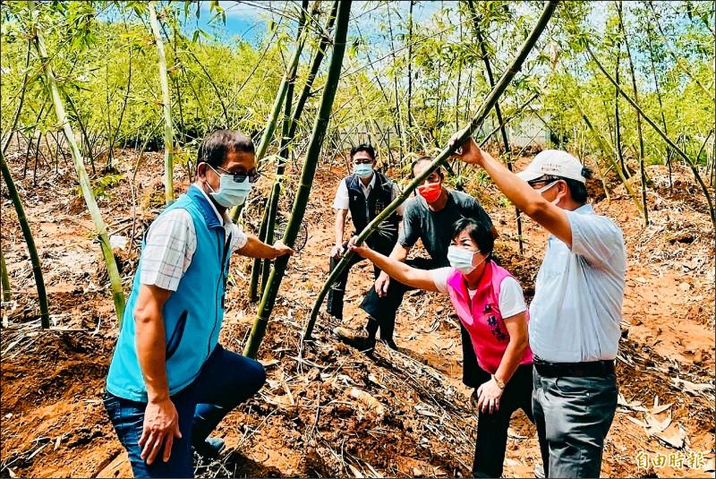 立委楊瓊瓔(右二)勘查竹筍受損情況。(記者張軒哲攝)