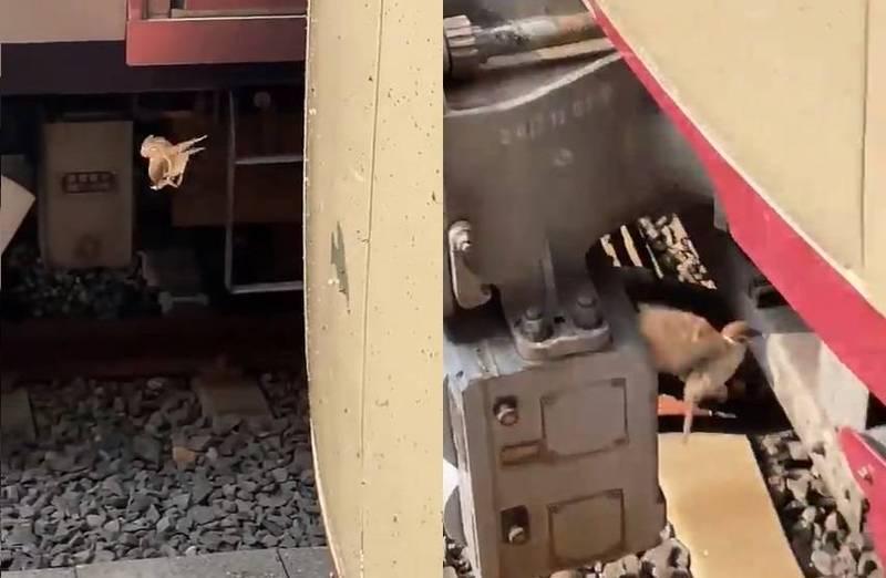 日本網友在火車站拍下了一段影片,只見一隻麻雀不斷在車廂前飛行,讓人不明白到底在做什麼。(圖取自推特「@nobu_photobow」)