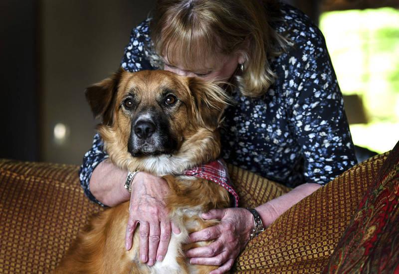 美國愛達荷州1名女子表示,家人日前於州際公路上,與另1輛車相撞,2歲半愛犬似飛出後車窗,就此下落不明,女子也在臉書發布尋狗啟事,所幸2天後終於找到狗,但令人訝異的是,當時牠竟然正在「工作」放羊。(美聯社)