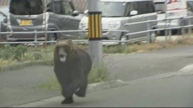 北海道札幌市區驚傳熊出沒,已知4人遭波及負傷。(翻攝自推特)