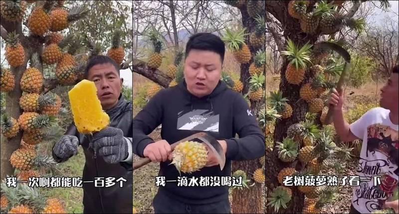 有網友近日在臉書發現1則中國鳳梨廣告,影片中的鳳梨竟然是長在樹上,網友對此留言「會有人相信嗎?」、「樹葡萄的原理?」(圖取自爆廢公社)