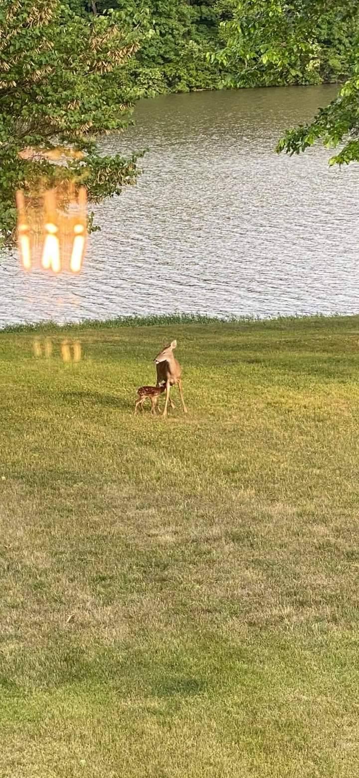 小鹿被救起後跟著媽媽一起離開。(圖擷自Ralph Dorn臉書)