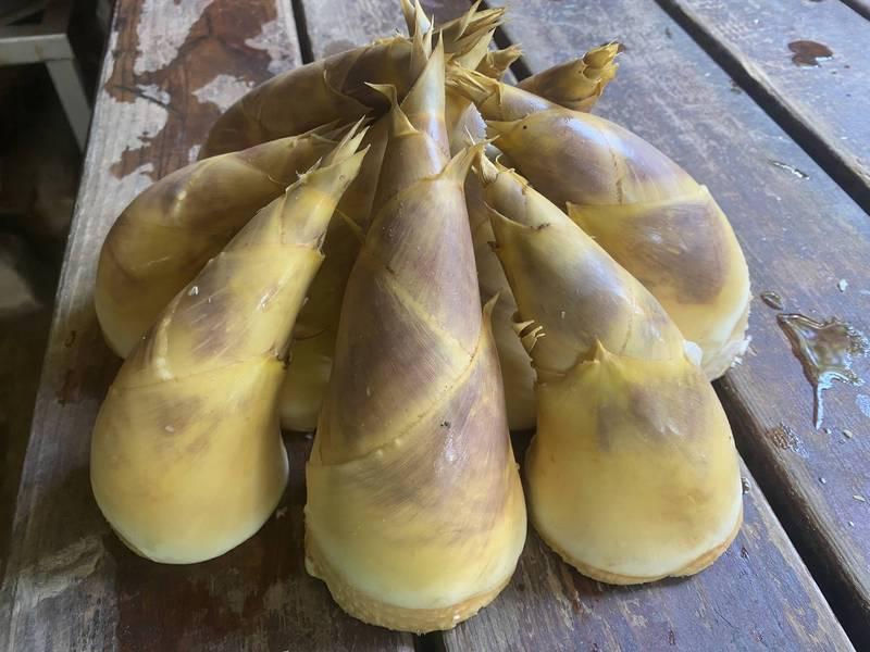 5月到9月是綠竹筍產季,新北市五股更是竹筍的知名產地。(新北市農業局提供)