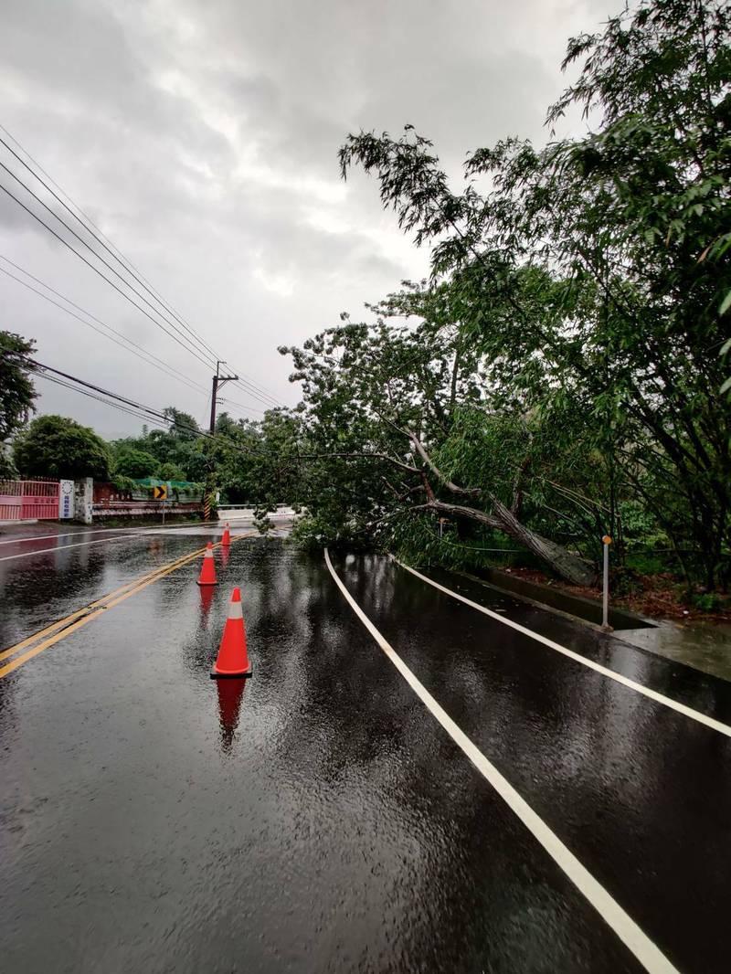 受暴雨侵襲影響,台3線今上午出現路樹倒塌情形。(記者王善嬿翻攝)