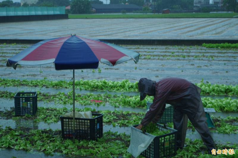 二崙地區蔬菜大部分運銷台北農產公司,農會盼工作人員優先施打疫苗。(記者林國賢攝)