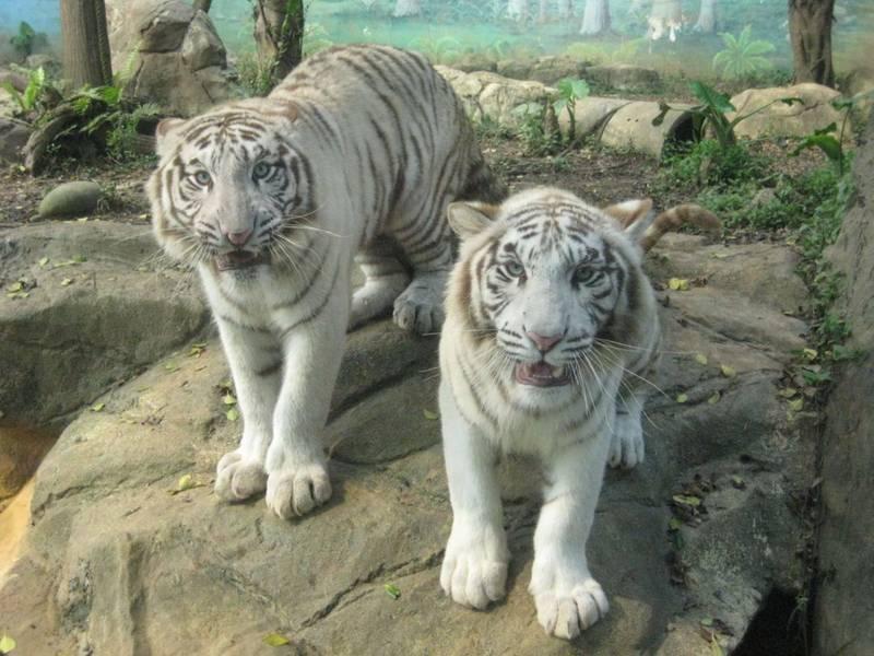 六福村動物園Online 動物明星狂賣萌、保育員轉當網紅 - 生活 -
