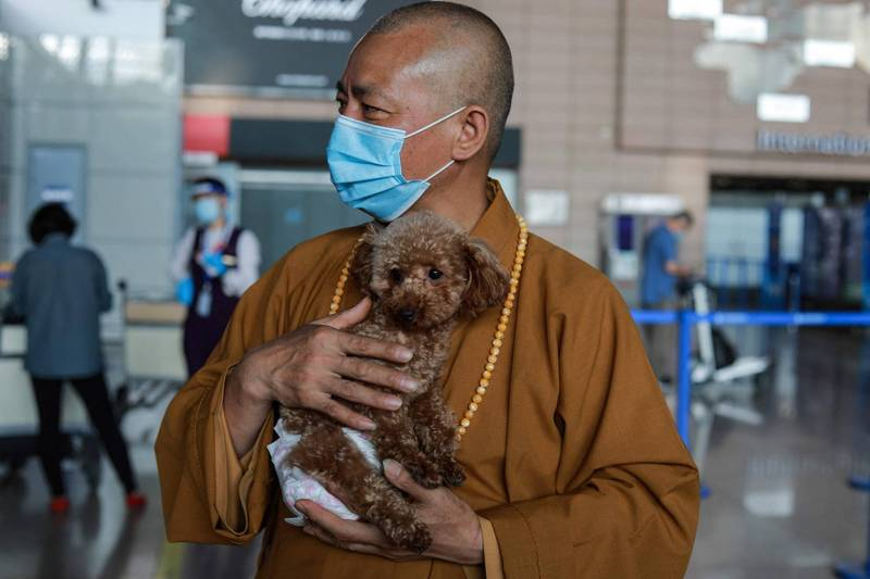 中國上海市報恩寺的住持智祥法師,從1994年迄今救助了近8000隻流浪動物。(法新社檔案照)