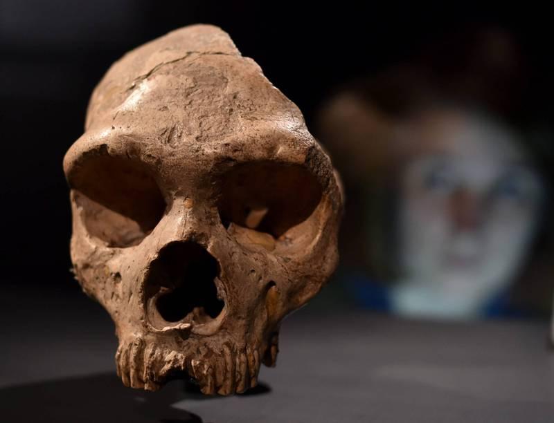 以色列最新研究顯示,在當地發現生活在10萬年前的遠古未知人類化石。(歐新社檔案照)