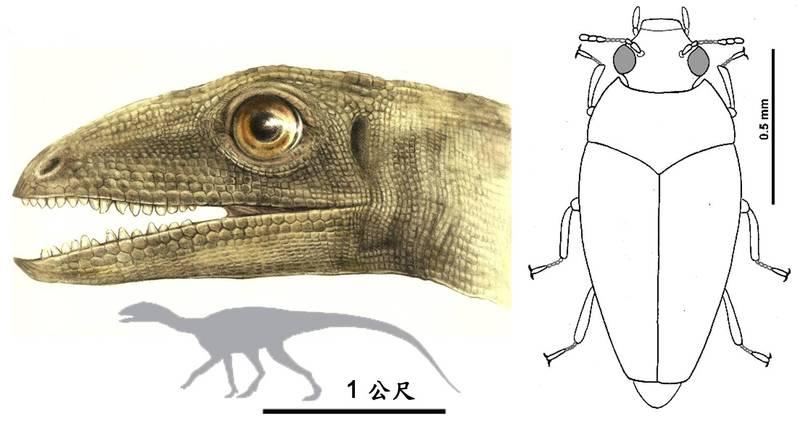 奧波萊西里龍與龍糞三疊藻食甲蟲的復原圖。(中山大學提供)