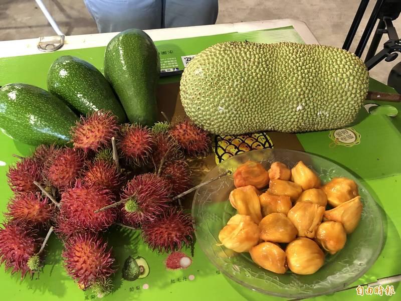 錯開產期增收入,鳳梨農兼種榴槤蜜、酪梨、紅毛丹(記者羅欣貞攝)