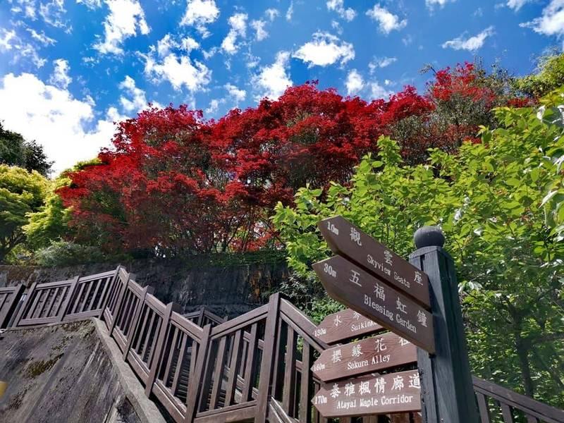 參山國家風景區管理處宣布,7月13日起,梨山楓之谷1956秘密花園將有條件開放。(記者陳建志翻攝)