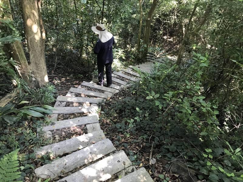 疫情微解封,彰化8條登山步道也重新開放。圖為彰化市桃源里森林步道。(林務局南投管理處提供)