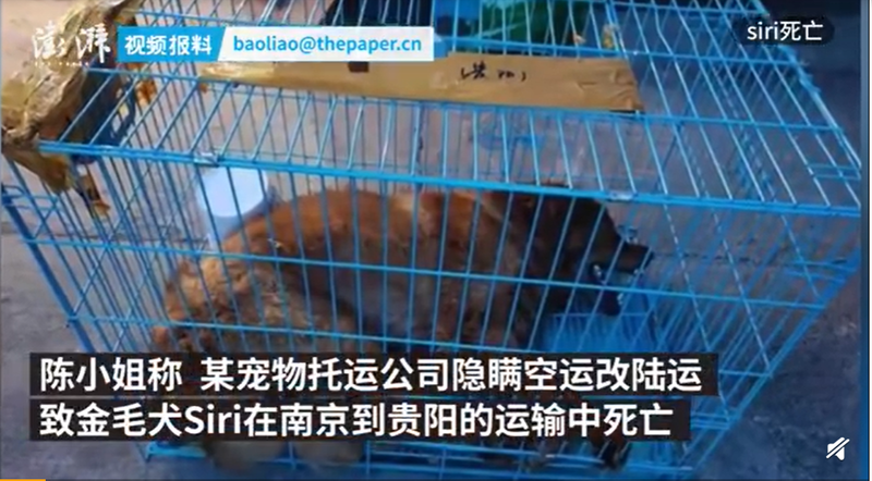 中國近日發生一起寵物託運死亡意外。(圖擷取自微博)