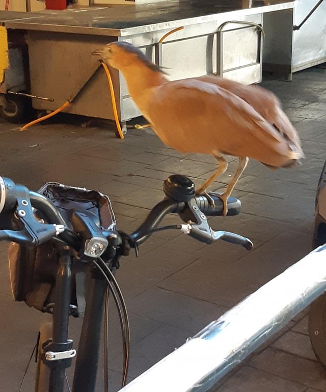 網友PO出腳踏車上的「不速之客」,意外引發熱議。(翻攝自臉書社團《路上觀察學院》)