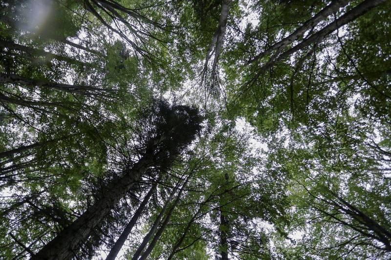 羅馬尼亞擁有大片森林,力挺歐盟本月稍早提出的復育森林等政策,盼可減少碳排。(路透)