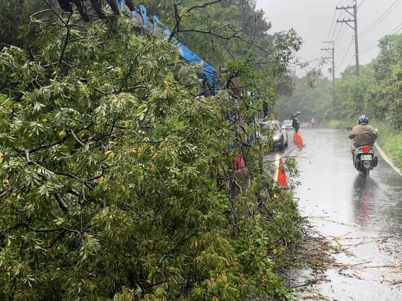 路樹倒塌阻礙交通。(龍潭警方提供)