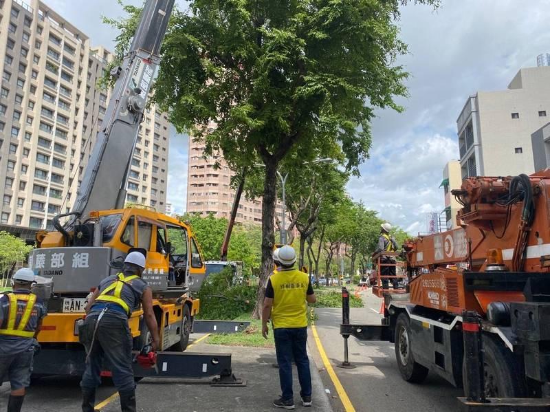 戒備烟花颱風中市開啟三級災害應變小組,完成行道樹預防性修剪。(圖由市府提供)