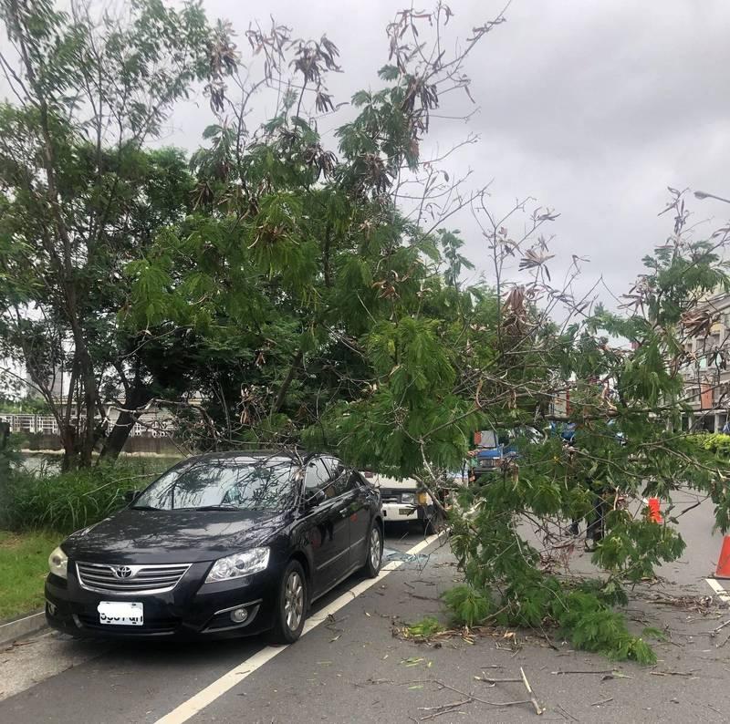 烟花颱風逐漸逼近,今日上午南市民權路4段有行道樹被吹倒,砸到停在路邊的車輛。(南市工務局提供)