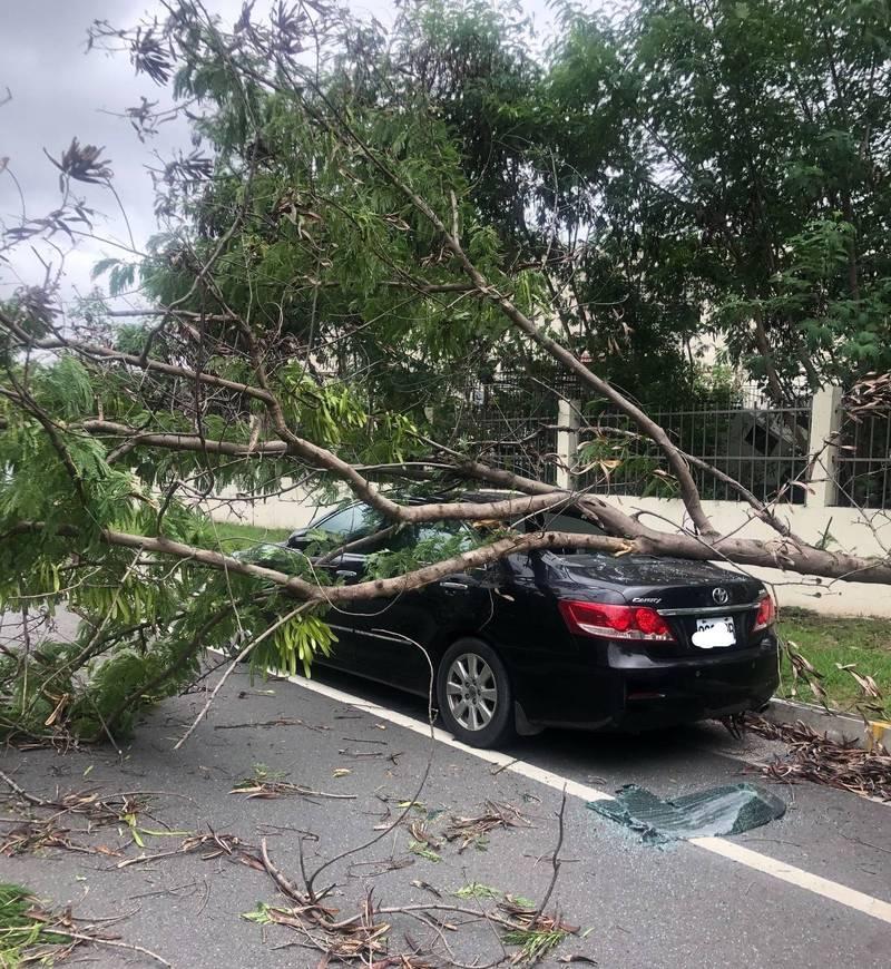 烟花颱風逐漸逼近,今日上午南市民權路4段路上有行道樹被吹倒,砸到停在路邊的車輛。(南市工務局提供)
