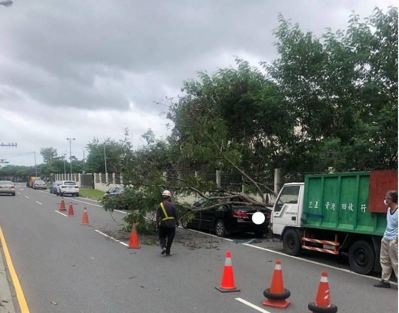 烟花颱風逐漸逼近,今日上午南市民權路4段路上有行道樹被吹倒,匝到停在路邊的車輛,工務局獲報後協助清理。(南市工務局提供)