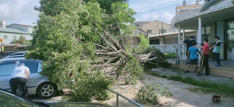 嘉義縣太保市南新國小發生籃球場旁老棵榕樹遭強風連根拔起毀車事件。(讀者提供)