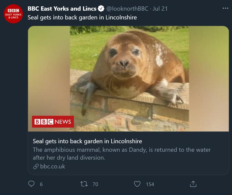 英國林肯郡一名女士,日前在自家庭院澆水與修剪樹木時,竟意外看到一隻海豹在做日光浴,讓她既驚嚇又驚喜,趕緊通報專業人員來協助。(圖翻攝自looknorthBBC推特)