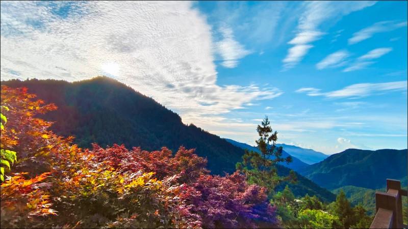 太平山森林遊樂區27日起重新開園。(羅東林管處提供)