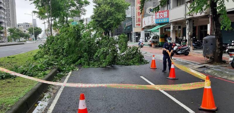 高雄市三民區中華二路昨天上午路樹突然倒下,造成一名女騎士警嚇摔車。(警方提供)