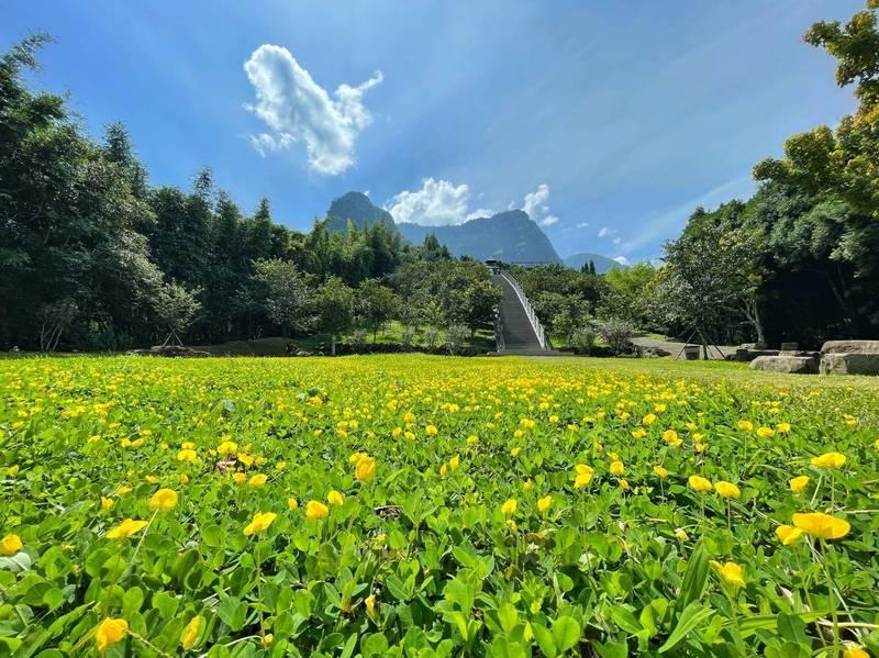 「寒溪呢」滿山遍野的蔓花生黃色小花相當漂亮。(「寒溪呢」提供)