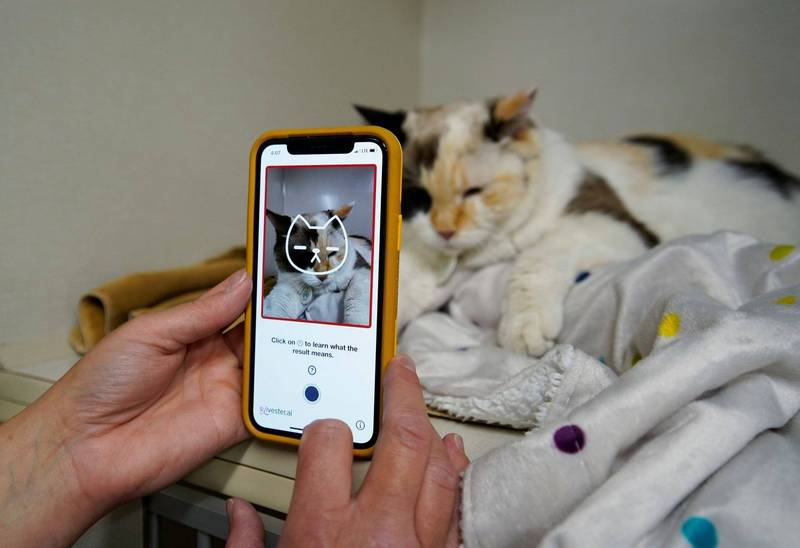 加拿大一家動物健康技術公司特地開發出一款手機app,讓主人在歡喜拍照之餘,還可順便偵測貓咪的身體狀況。(路透)