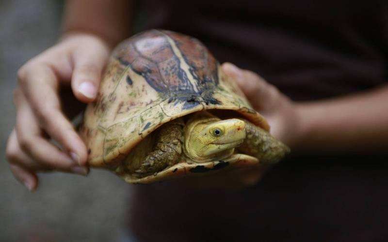 英國一隻寵物龜一年前決定離家出走,但牠奮力走了一整年,卻只離開家960公尺。示意圖。(美聯社)