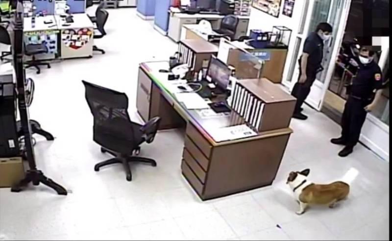 柯基犬「皮皮」外出玩耍迷途,聰明搭便車求助波麗士終順利返家。(警方提供)