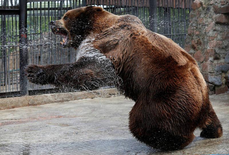 俄羅斯耶爾加基國家公園日前發生熊攻擊遊客的事件,一名無辜遊客遭啃食喪命。示意圖。(路透)