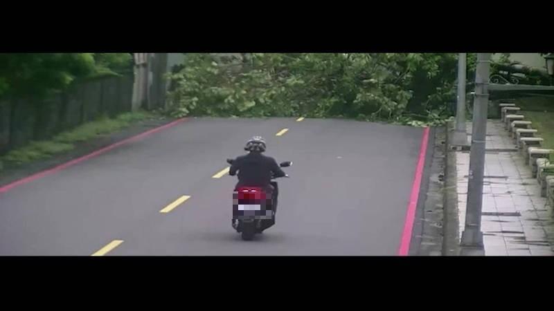 高雄五塊厝公園旁的路樹倒下橫臥馬路,當時有騎士正要經過,幸好沒被砸中。(民眾提供)