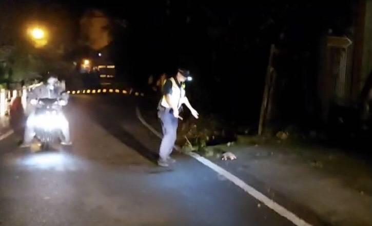 穿山甲夜間行經東關路1段十文巷,在馬路閒晃,員警趕緊將牠護送到路邊返回山林。(記者歐素美翻攝)