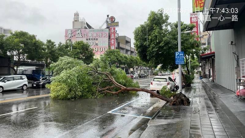 高雄市前鎮區一心一路今上午有路樹倒塌,橫躺佔據整條車道,嚴重影響通行。(警方提供)