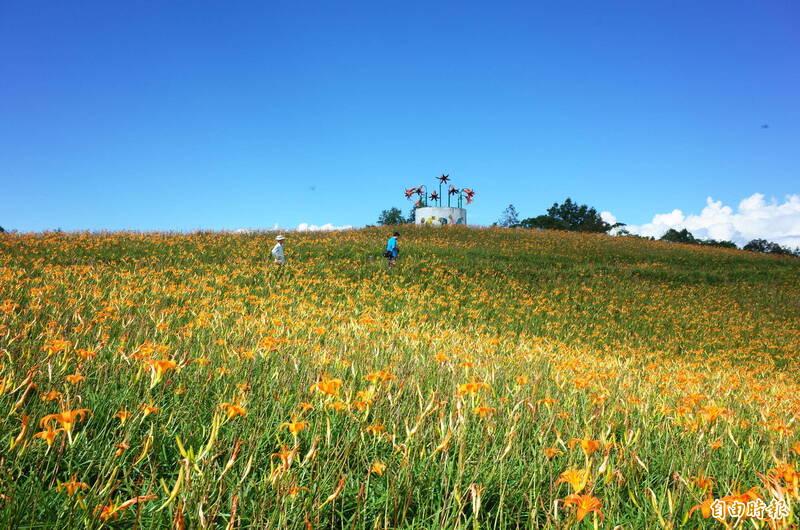 花蓮赤科山金針花預計8月中旬以後盛開。(記者花孟璟攝)
