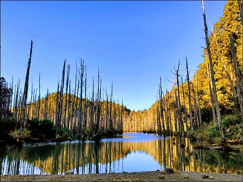 如夢似幻的「水漾森林」。(讀者提供)
