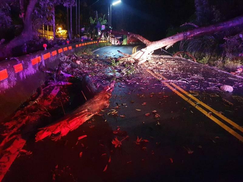 受西南氣流影響,南投縣國姓鄉大雨不斷,縣道136線近50K處凌晨有大樹倒伏路中,雙向交通受阻。(民眾提供)
